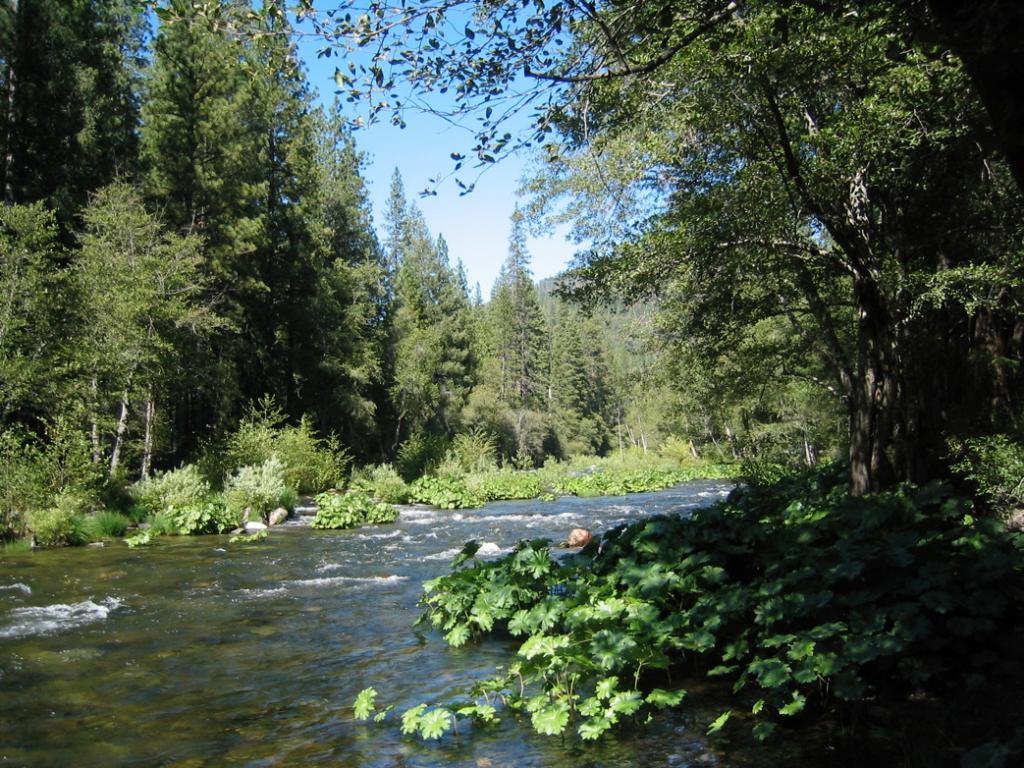 Mokelumne River at Moore Creek